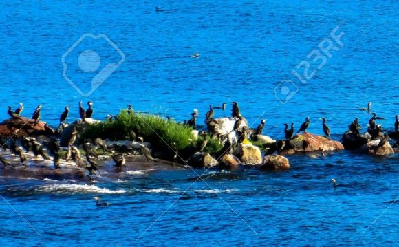 Bird flock on an island in the