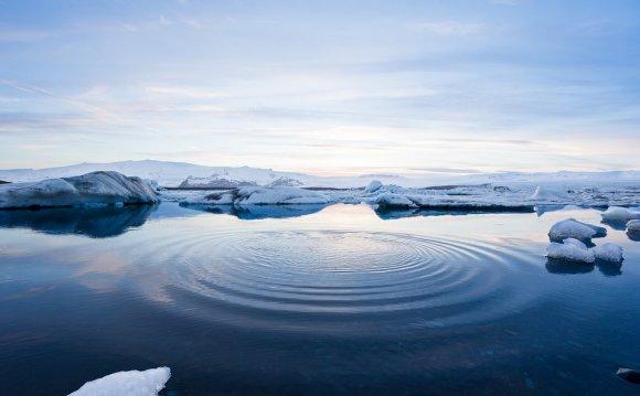 Arctic: Marine Life Migrates