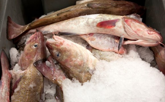 Full recovery of cod stocks in