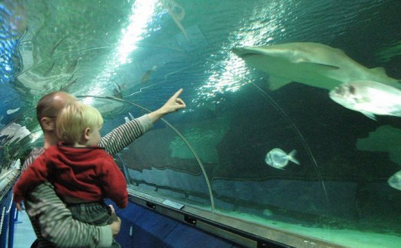 Deep Sea World, North Queensferry