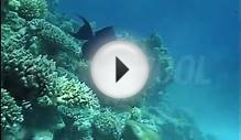 Coral, Dahab, Day, Red Sea, Redtooth Triggerfish, Sea Life